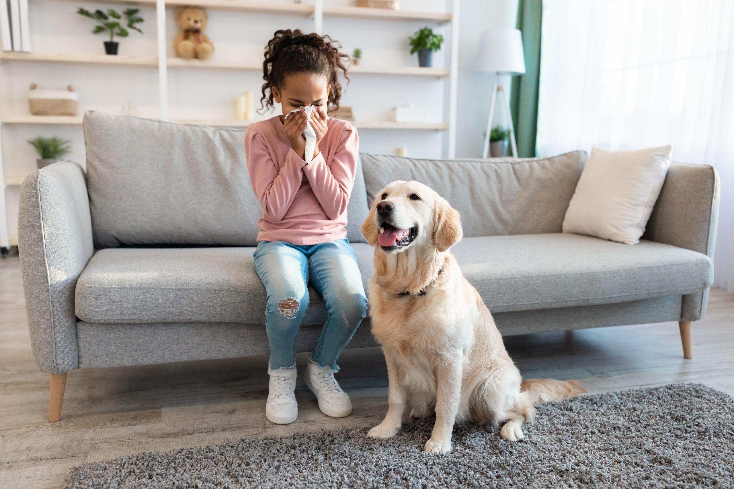 alergias y animales